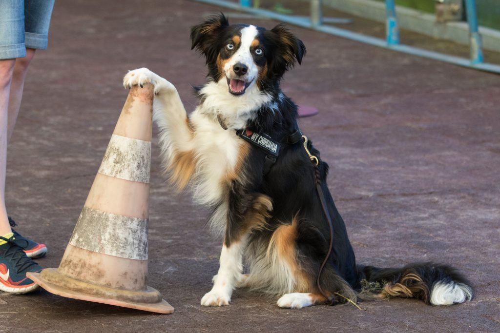 Hund mit Pylone