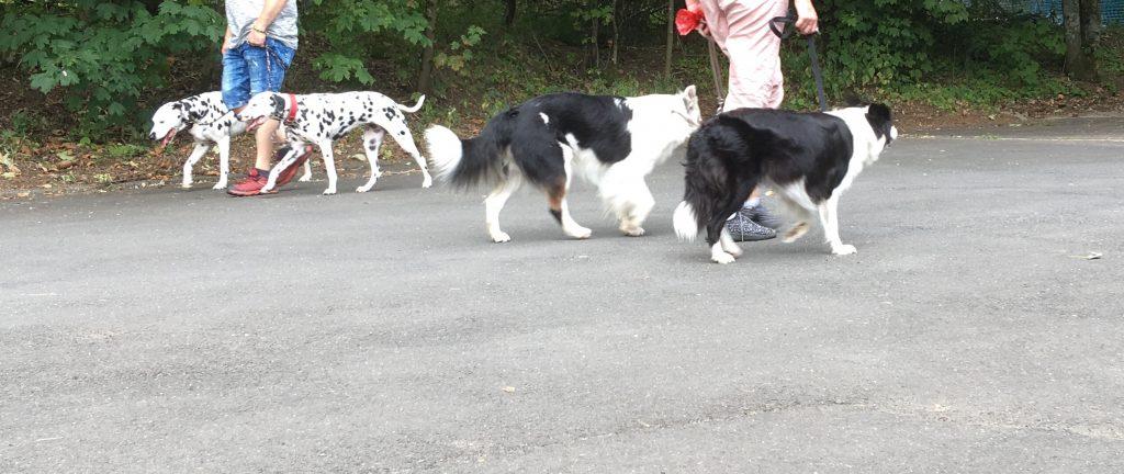 Führen zweier Hunde