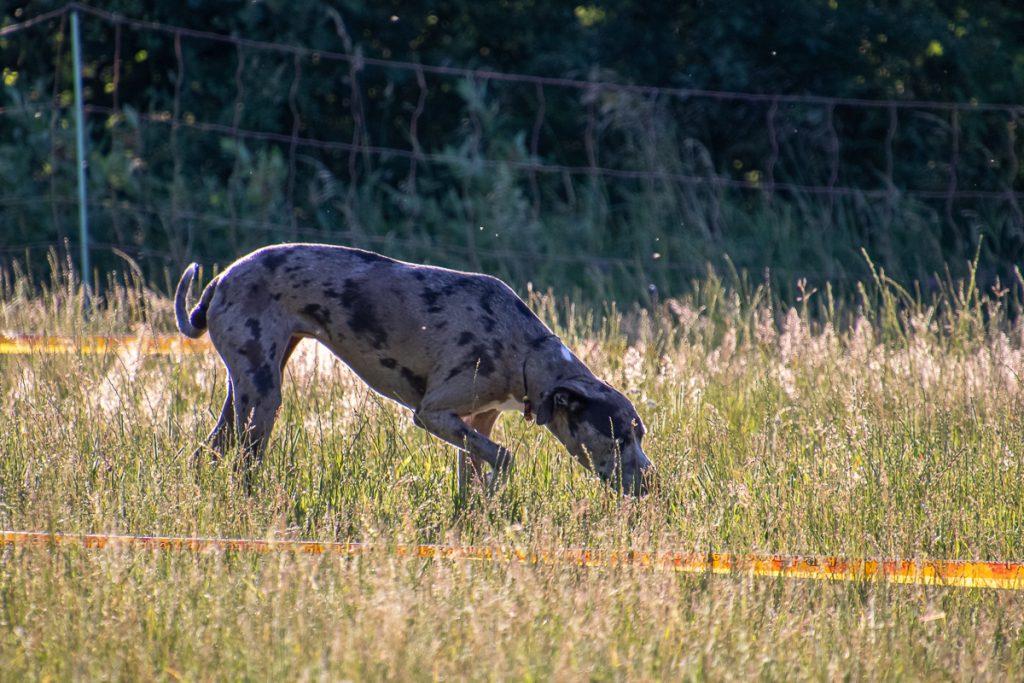 Hund sucht in der Fläche