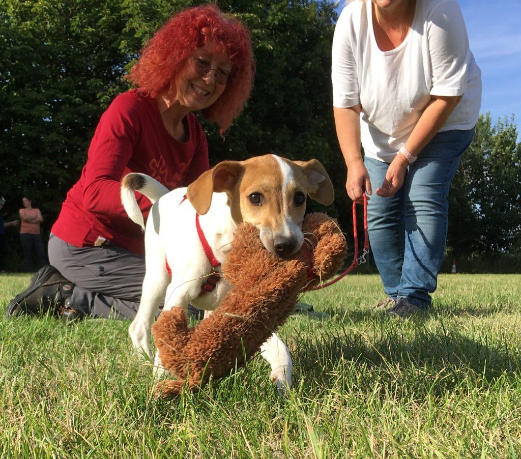 Hund mit Plüschspielzeug