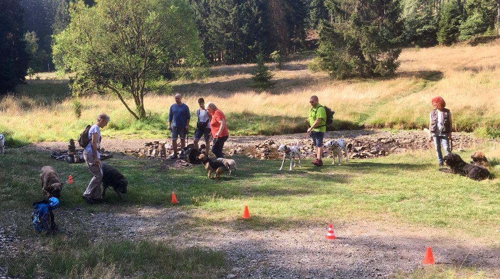 Waldlichtung mit Menschen und Hunden