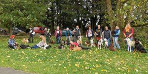 Große Gruppe mit vielen Hunderassen