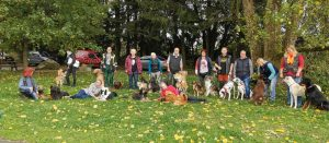 Große Gruppe mit vielen Hunden
