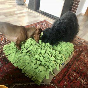 Schnüffelrasen mit 2 Hunden