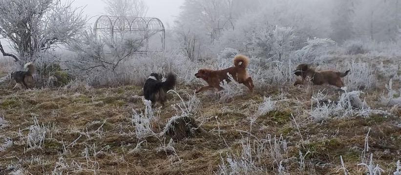 Hunde spielen im eisigen Nebel