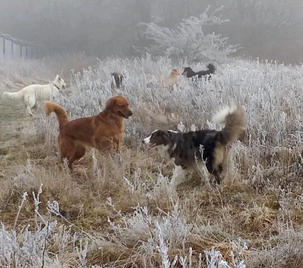 Hundespiel im vereisten Gelände