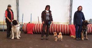 Ein kleiner Hund zwischen zwei sehr großen Hunden
