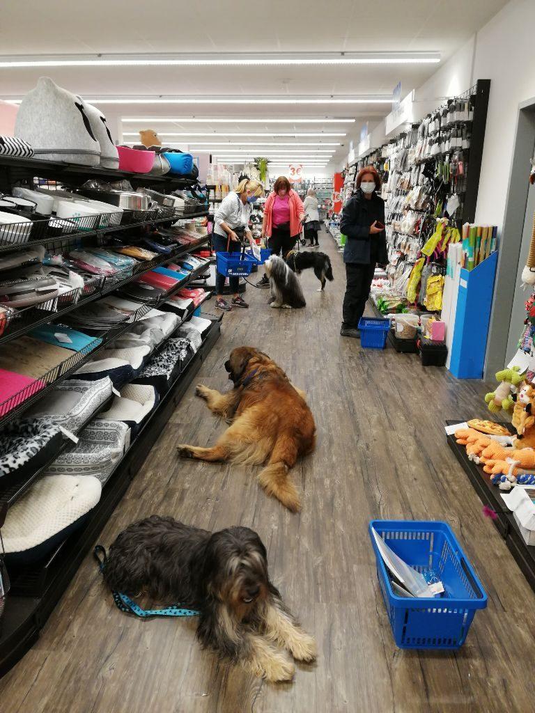 Hunde im Geschäft