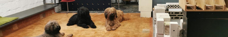 Hundezentrum Siegerland